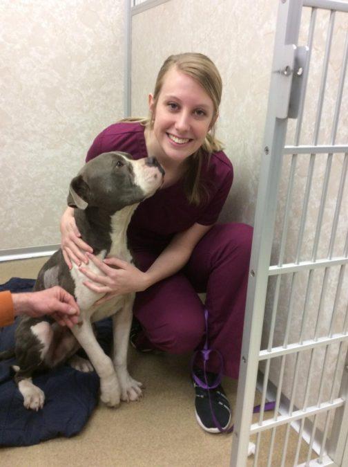 Credit: Love-A-Stray Dog Division Non-Profit Rescue
