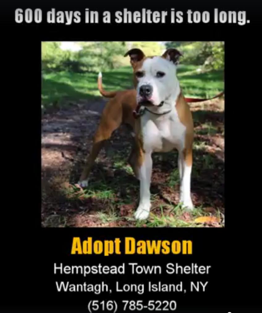 @adoptdawson