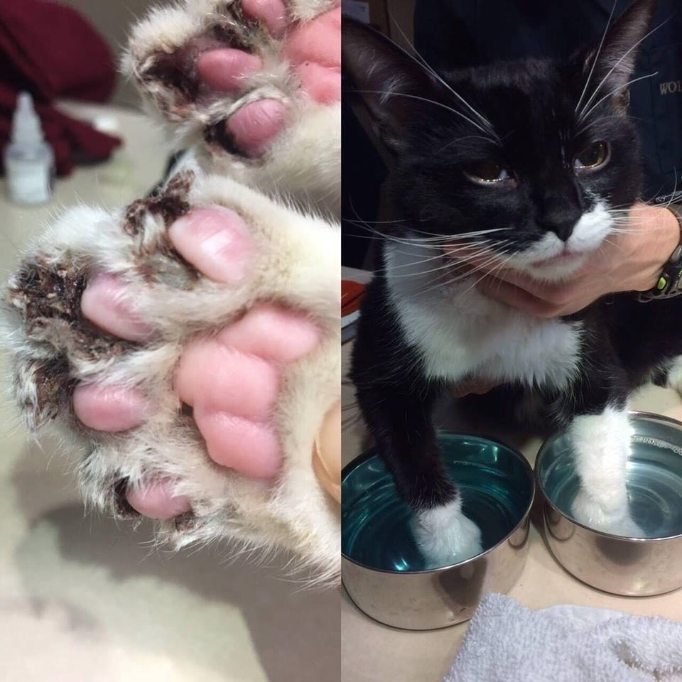 cat bloody urine after catheterization