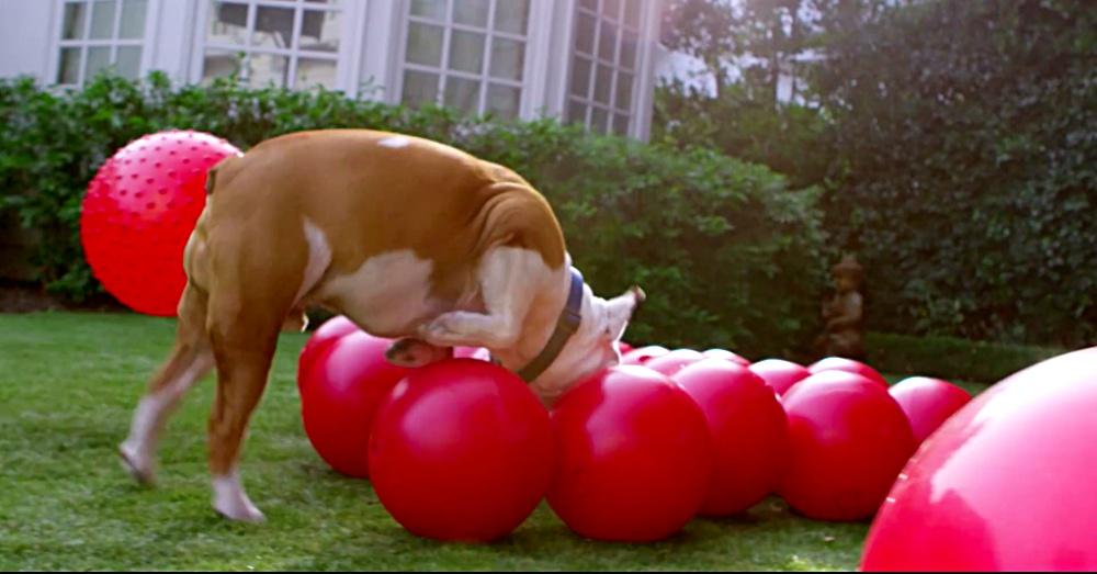 bulldogball