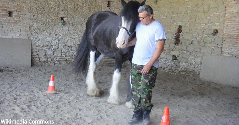 equine-therapies3