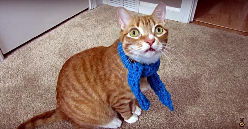 marmscarf1