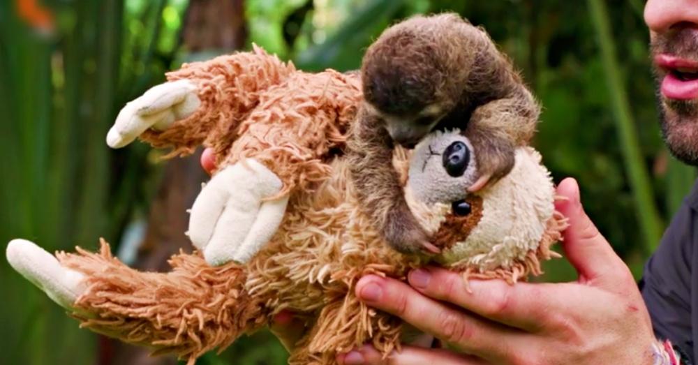 slothplush1