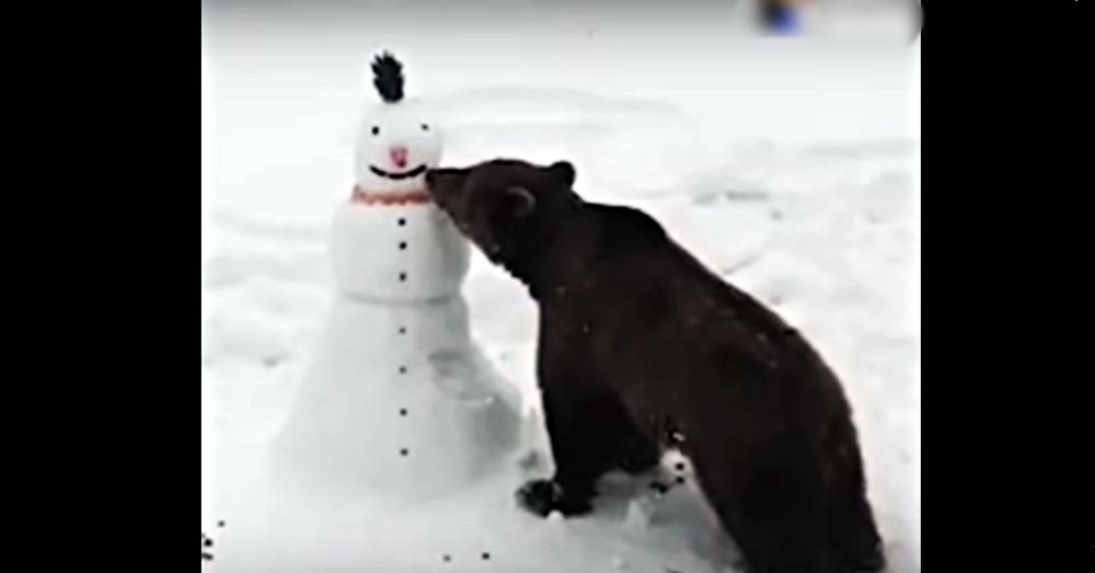 snowbear1