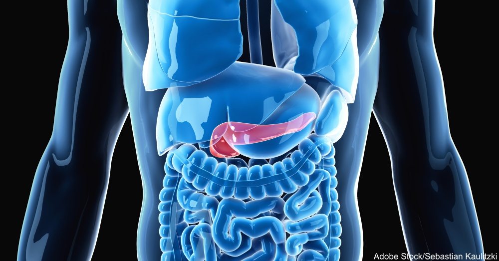medically accurate illustration of the pancreas