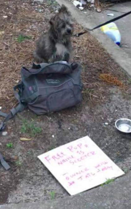 Credit: South Eastern Homeless Animals