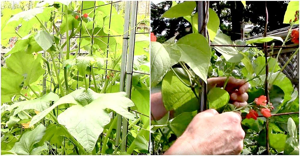 growing-crops-vertically