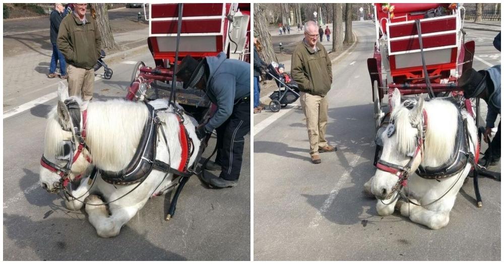 horsefinal1