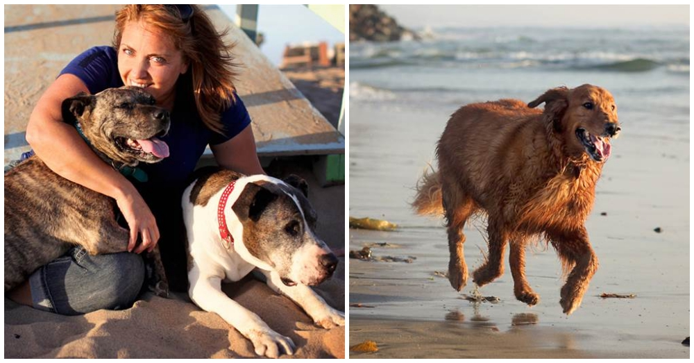 Photographer Lori Fusaro on left with her dogs, Today