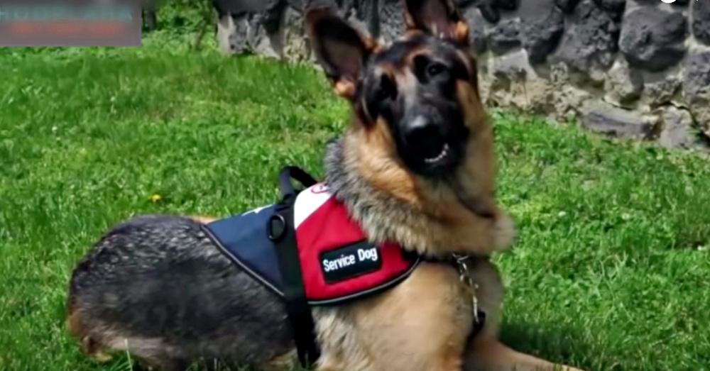 Gabriel, Service Dog