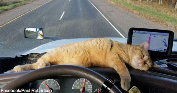 trucker-cat1