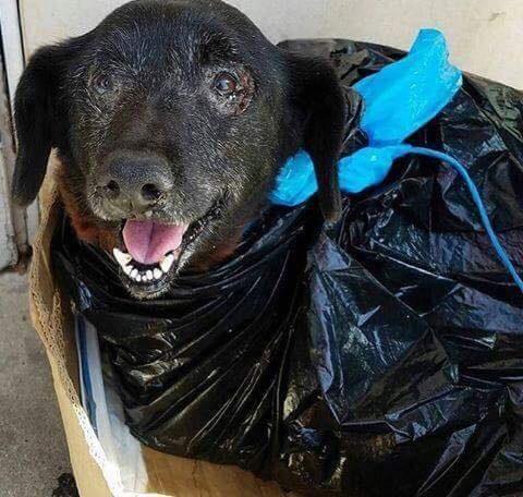 Saving Carson Shelter Dogs
