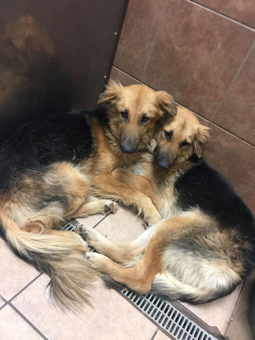 A-Team Elite Rescue Dogs