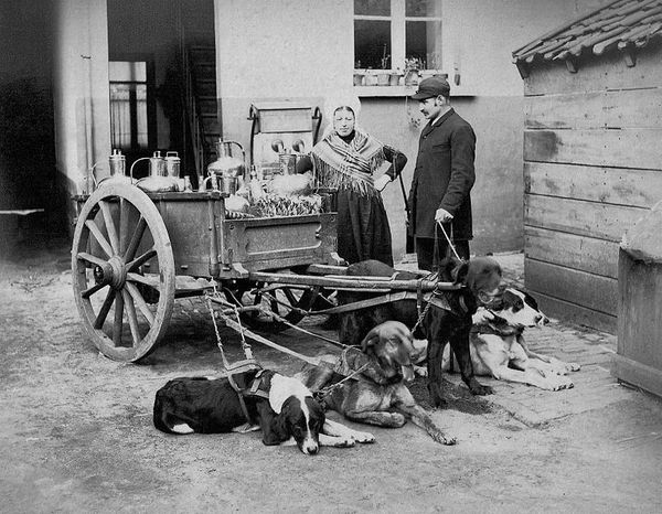 Belgium_Flemish_dog_cart_c.1880