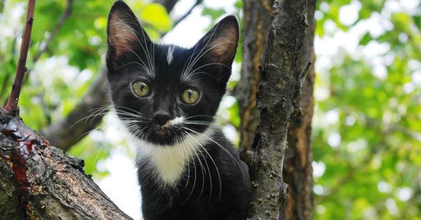 Spring-kittens5