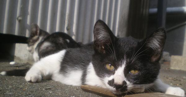 spring-kittens2