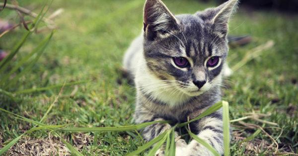spring-kittens3