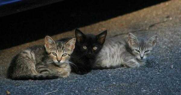 spring-kittens4