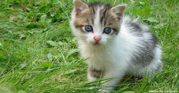spring-kittens6