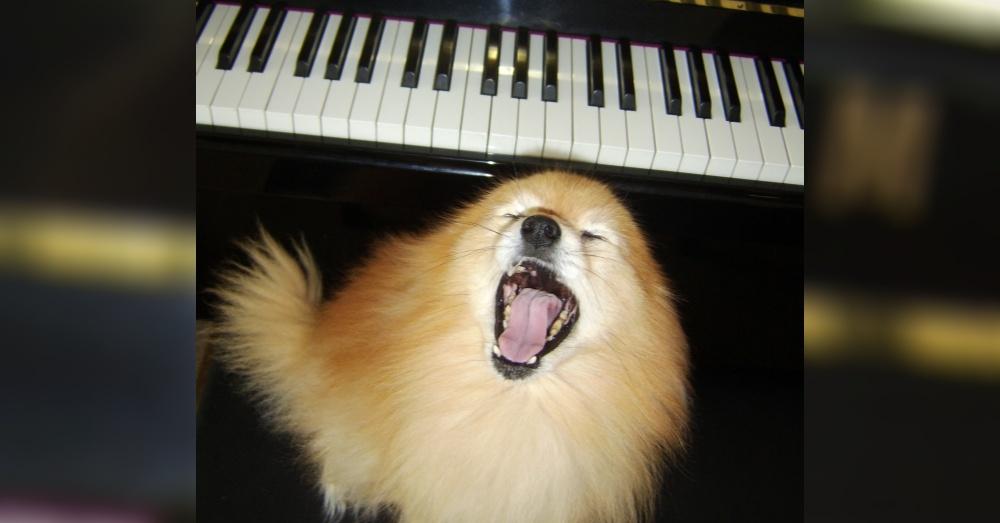 DogMusic4_1000x523
