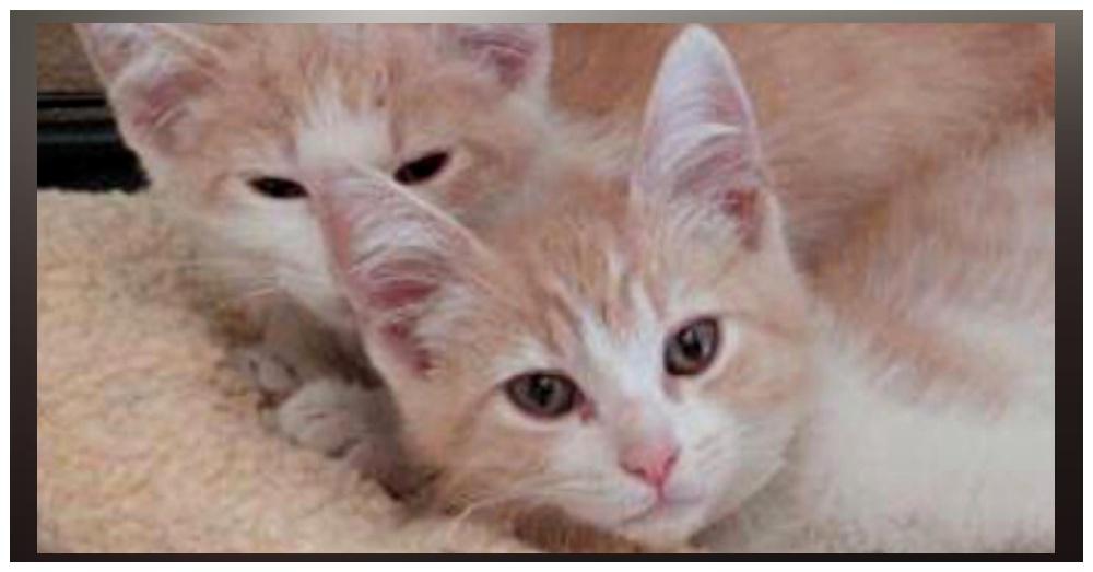 Petaluma Animal Services/Instagram