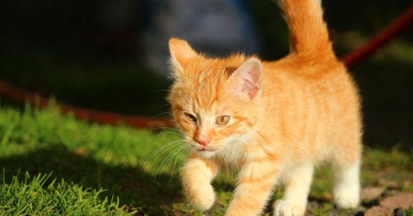 cat-myth-11