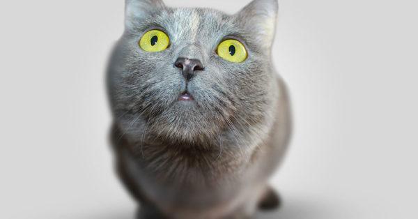 cat-myth-6