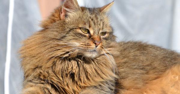 cat-myth-8