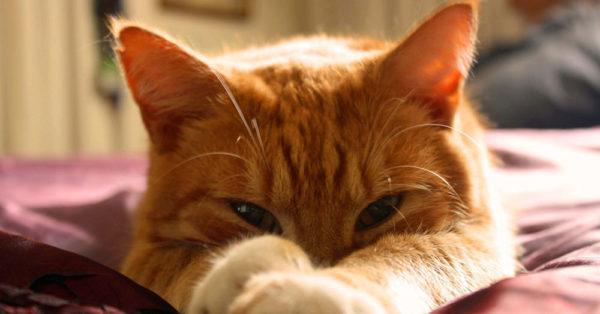 cat-myth-9