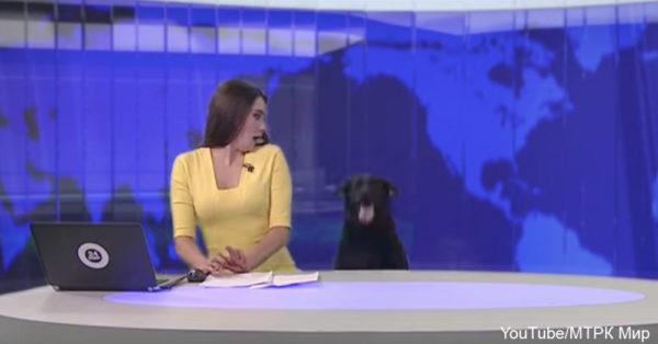 dog-news2