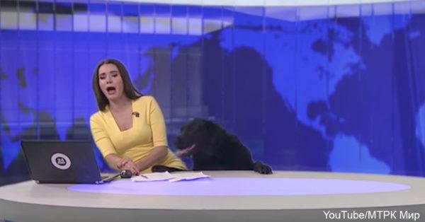 dog-news3