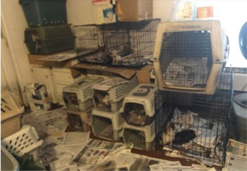 Linda Lynch was found operating an unlicensed facility in Texas.  Inspectors found dogs in tiny cages, piled up and surrounded by clutter.  It appeared the dogs barely had enough room to turn around. The facility is now state licensed. (Texas Dept of Licensing and Regulation / November 2016).