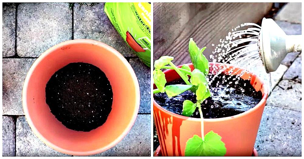 kitchen-garden-tips-1