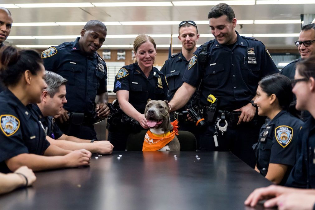 (Stacey Axelrod/ASPCA)
