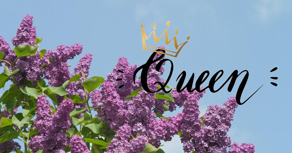 queenlilac