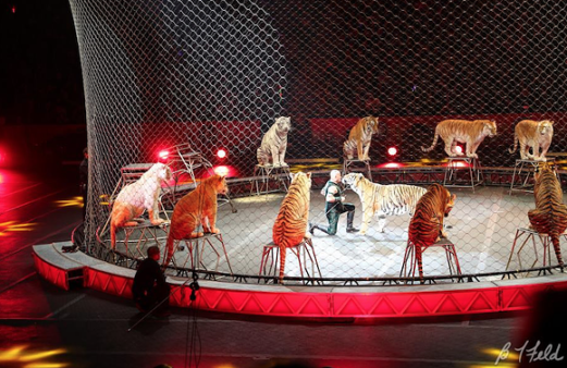 Ringling Bros. and Barnum & Bailey Circus/Facebook