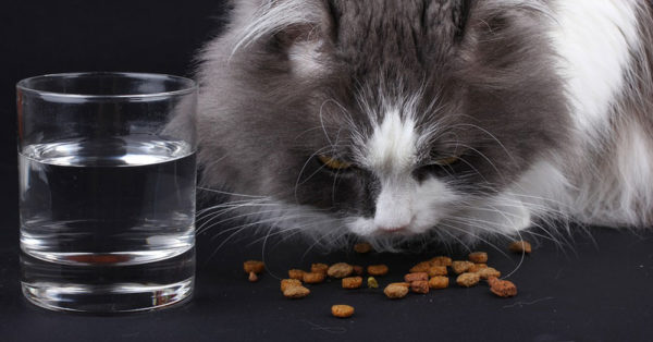 Canned_Cat_Food5
