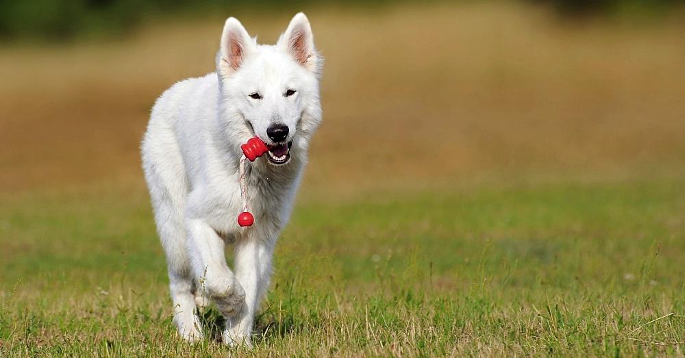 DogPlay1_1000x523