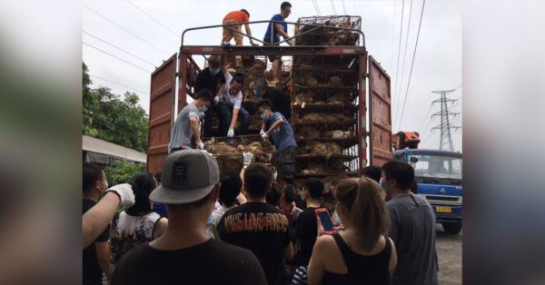 Source: HSUS Rescuers help remove the animals from the truck.