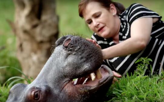 YouTube- Animal Planet