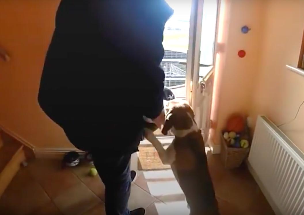 Daniel Drzewiecki via Jukin Video