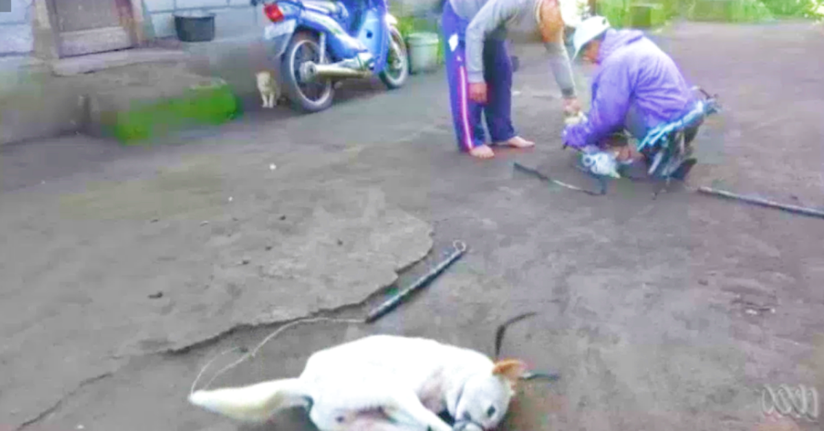 A dog tries to free itself as men subdue a another.