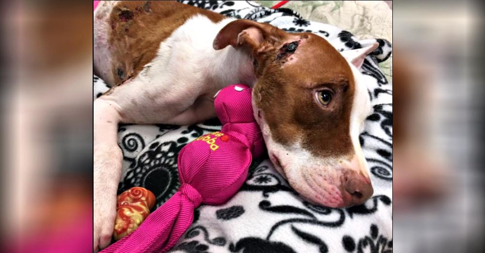 Photo:Facebook/ Jupiter Pet Emergency & Specialty Center