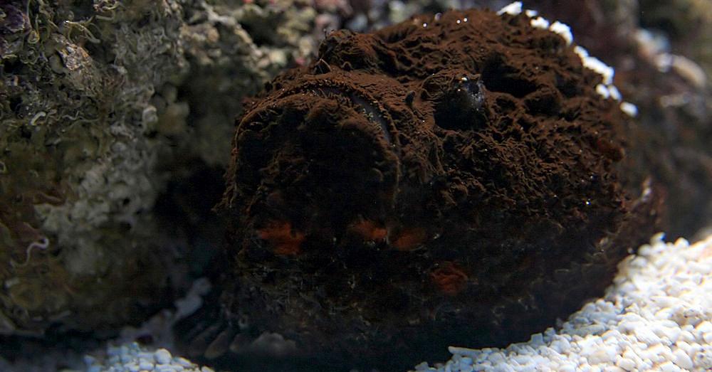 Stonefish2_1000x523