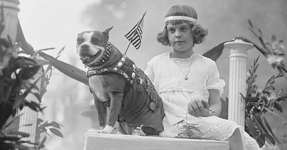 Photo: Library of Congress Prints and Photographs Division Washington -- Sgt. Stubby in a parade after the war.