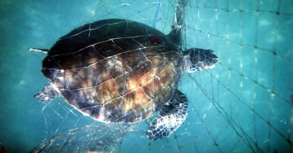 turtle.net.568