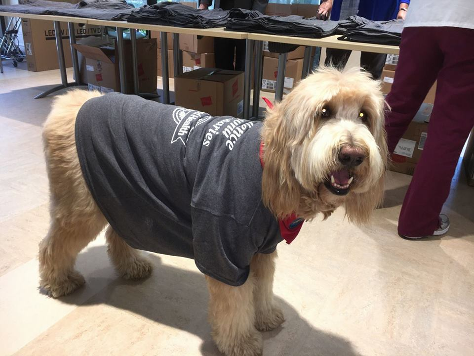 facebook/Dixie the Doodle Therapy Dog