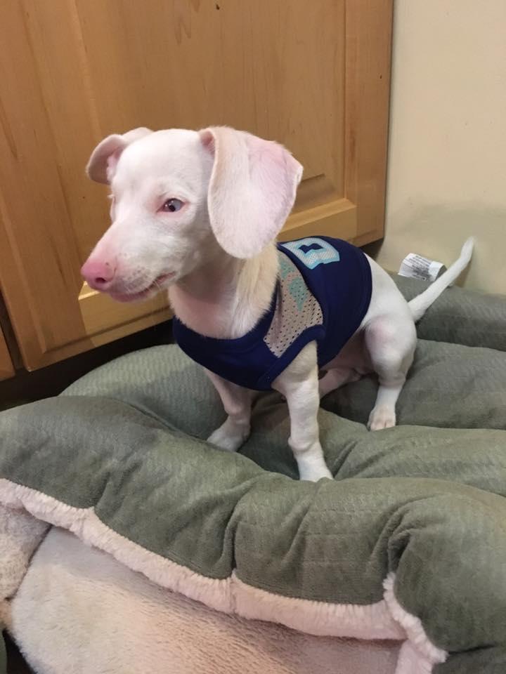 Blind And Deaf Dog Rescue