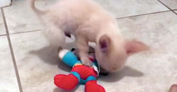Source: YouTube/This Dog's Life