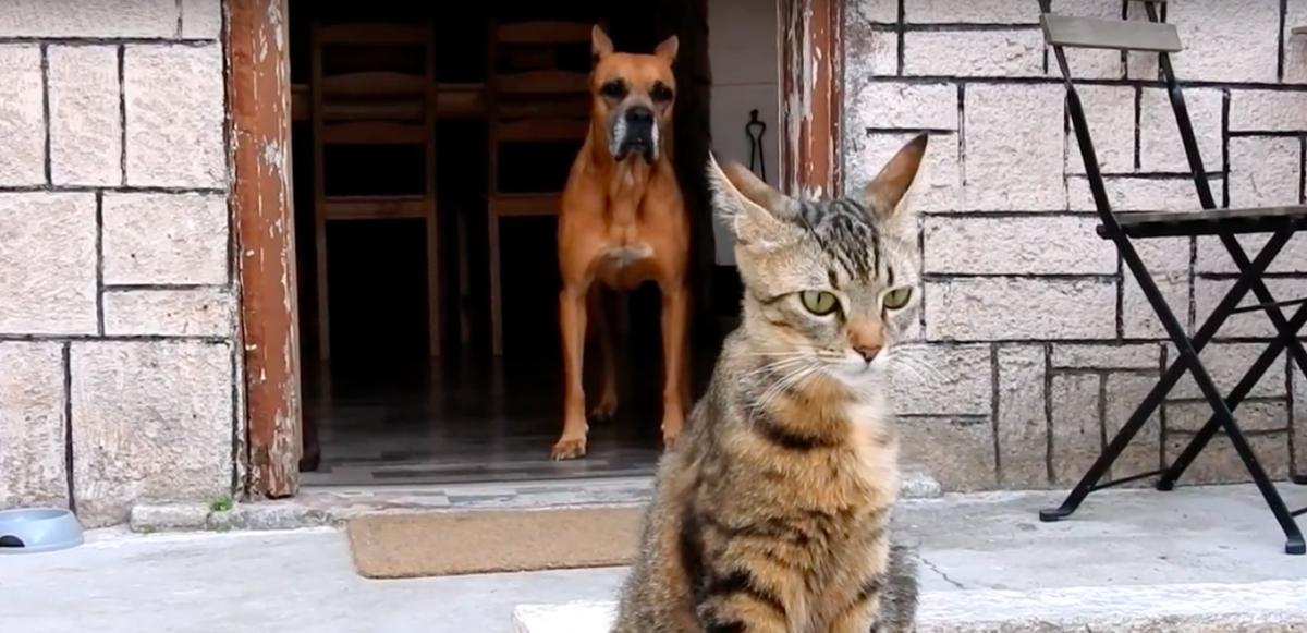 The Orphan Pet
